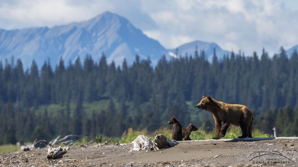 A bear family in a stunning landscape.