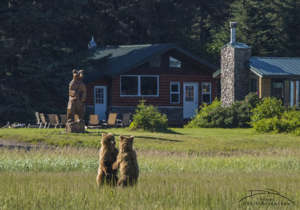 Two Grizzly bears in front of a wooden copy by the Silver Salmon Creek Lodge.